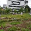 Le nouveau jardin de la Régie de Quartier