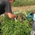 Les jardiniers nous accueillent et nous font découvrir leurs plantes