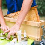 Korhom à la récolte du miel
