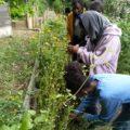 Jardinage au Shakirail